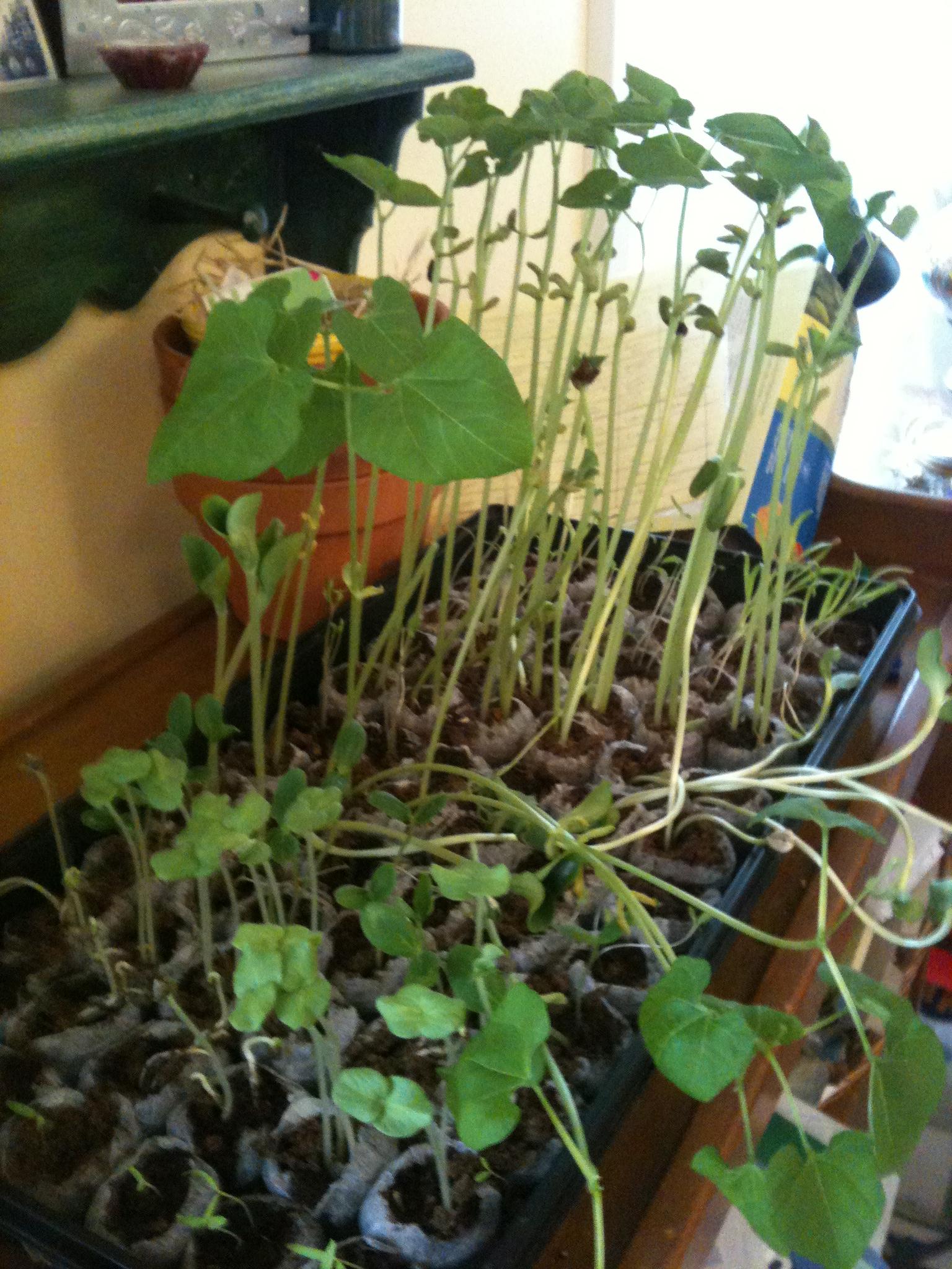 Seedlings April 2012 001