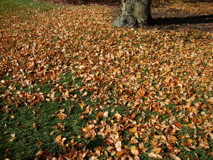 leaves_on_ground_fall