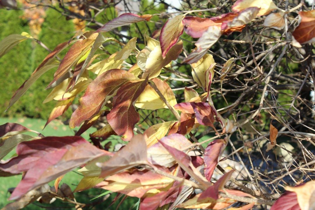 october-2014-copper-crimon-gold-leaves