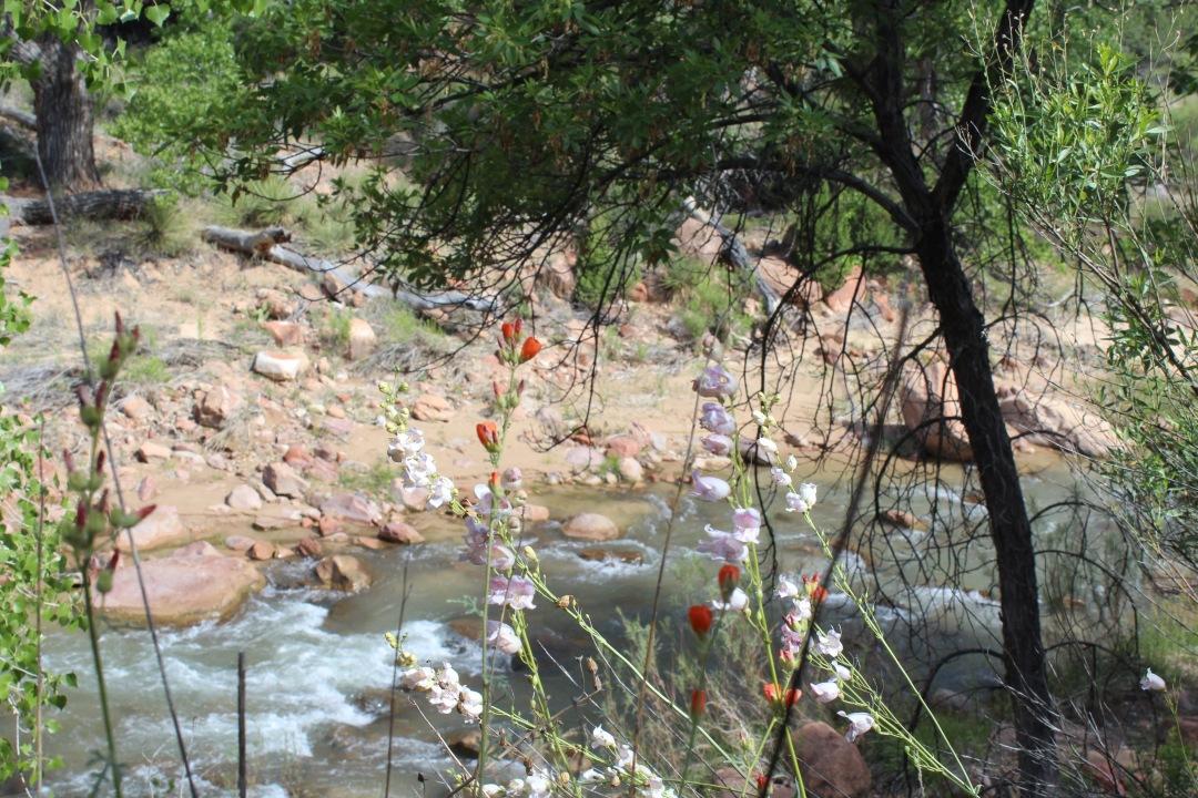 flowers-near-river