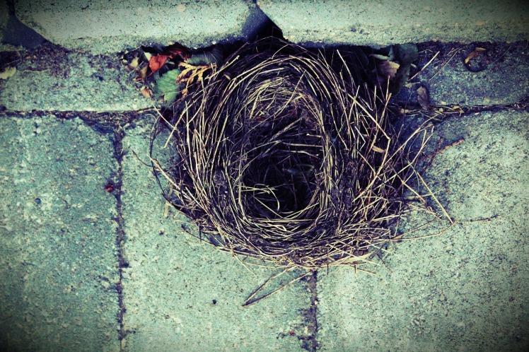 bird-nest-1834691_1280