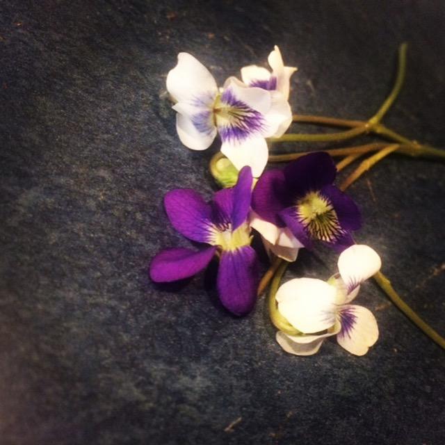 Miniflowers_edited