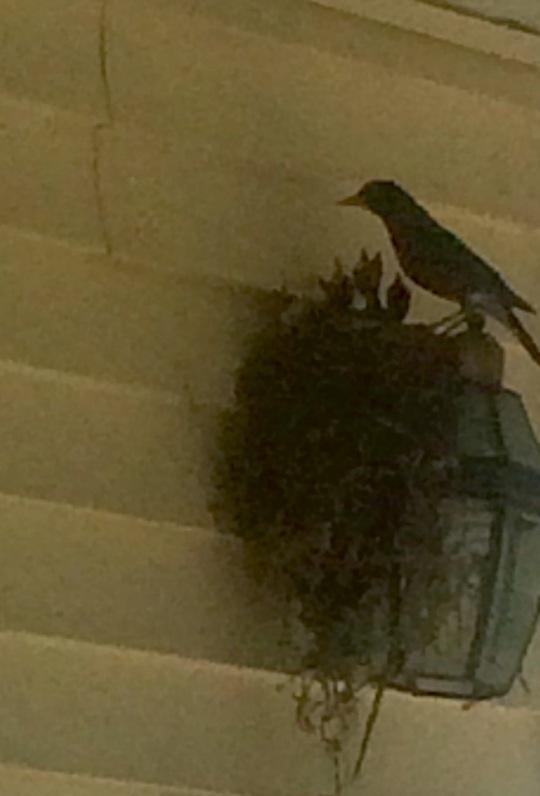 BabyBirds_FrontPorch