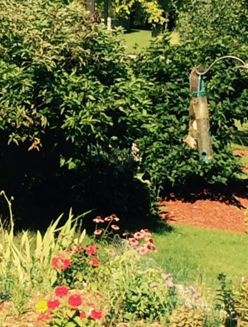 Squiires on bird feeder