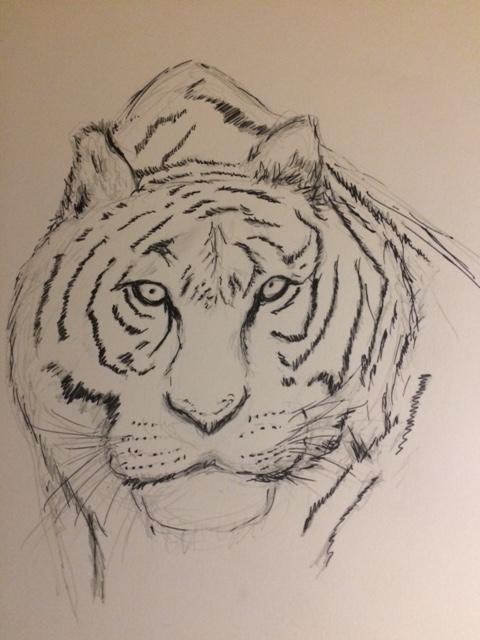 tiger_drawing