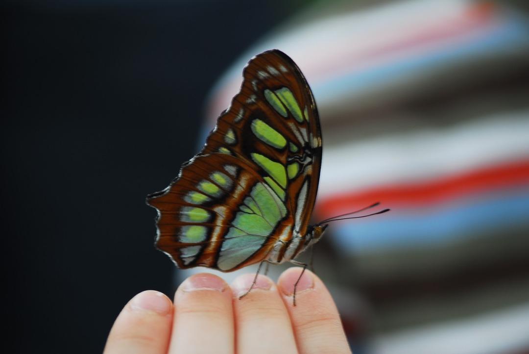 butterfly-3290666_1280