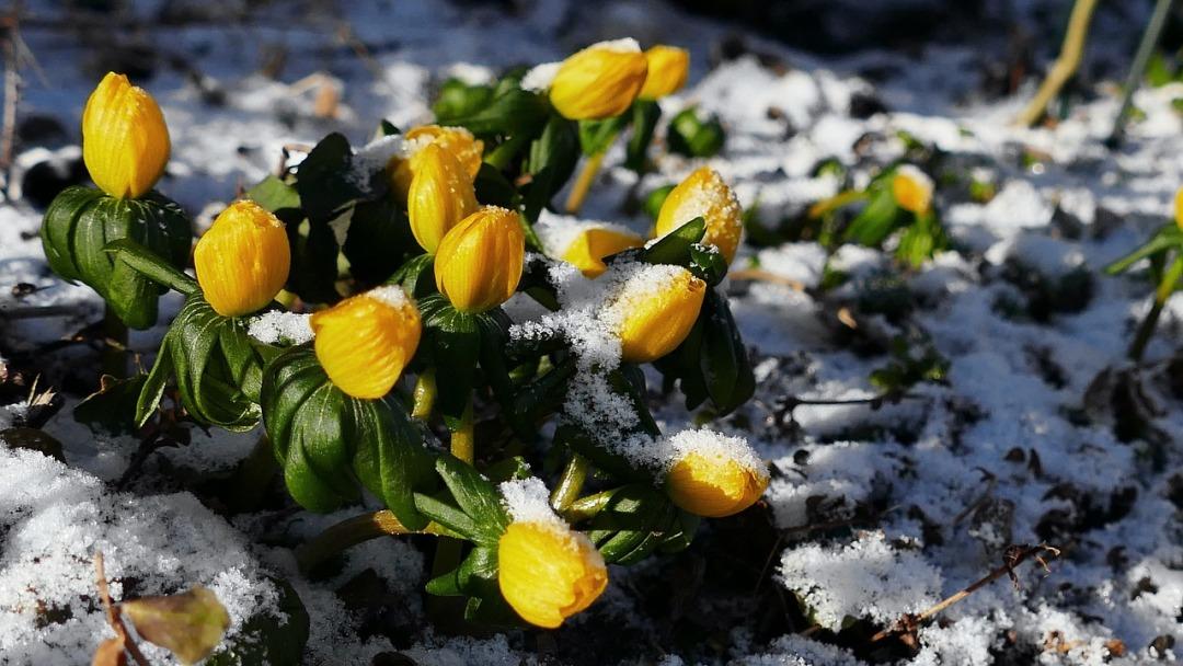 flower-3183110_1280