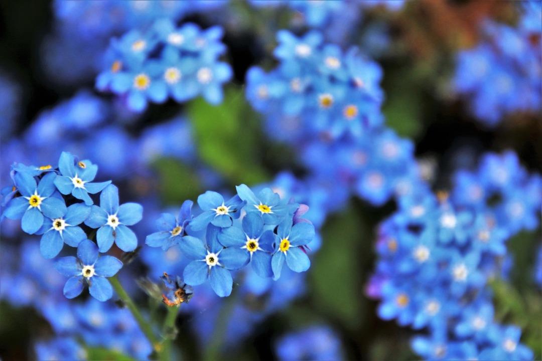 blue-3374250_1280