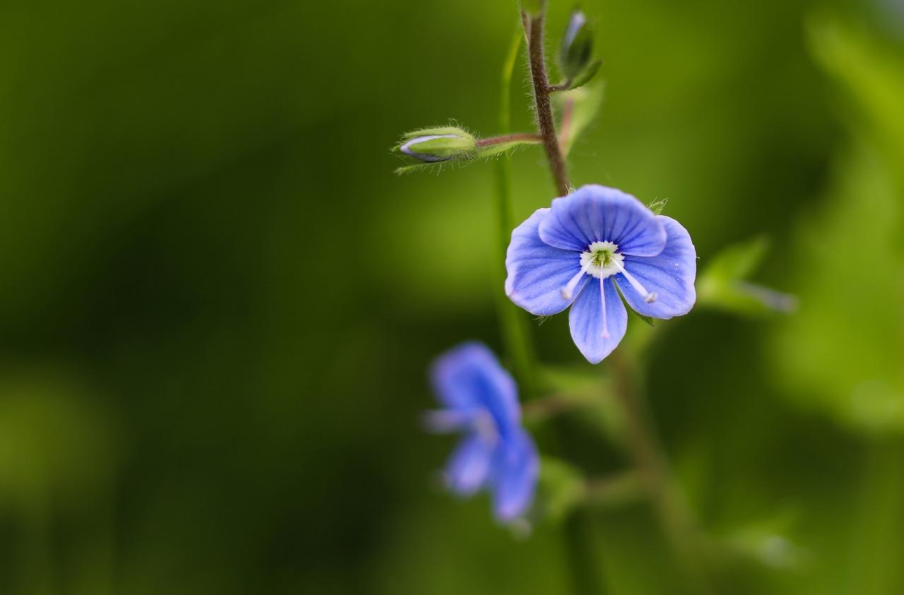 flower-2360964_1280