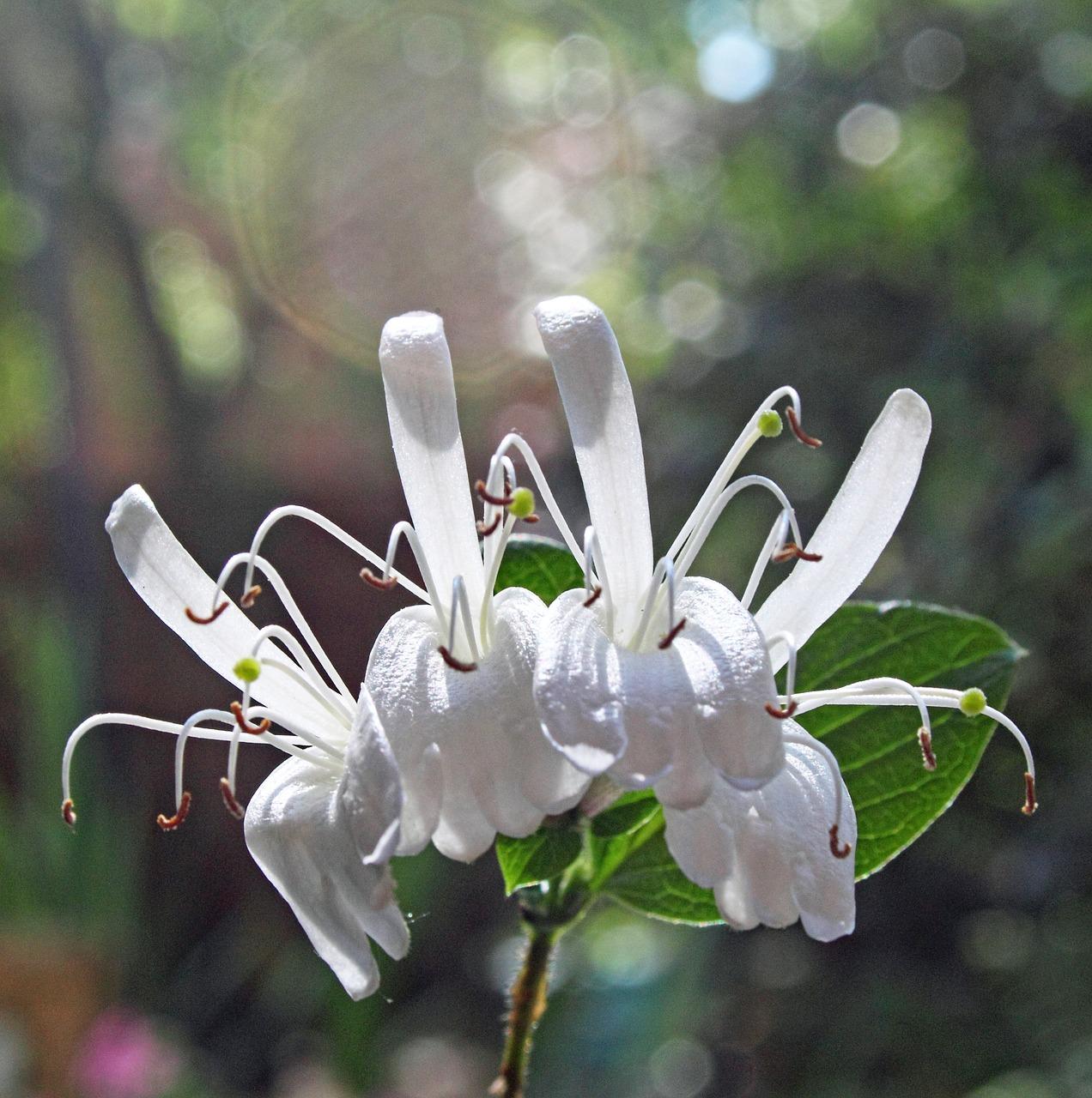 flowers-1754822_1280